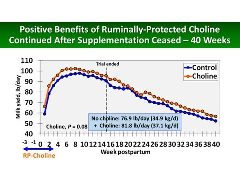 Choline benefits chart