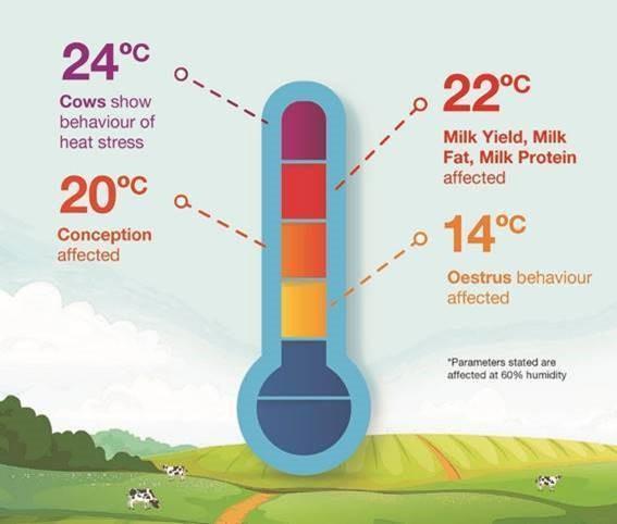 Heat stress temperatures